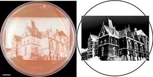 Das Foto der Alten Universität in Marburg wurde mit Hilfe des psd-Moduls in erstaunlich hoher Auflösung auf einem Rasen von Hefezellen reproduziert.