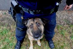 Forschung Spezial - Abkehr von schwarzer Pädagogik bei Polizeihunden