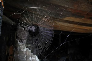 spinnen in innsbrucker wohnhaus sache erledigt mieten immobilien. Black Bedroom Furniture Sets. Home Design Ideas