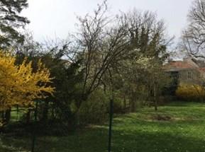 Süd-Garten