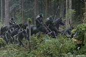 Die Affen auf dem Kriegspfad