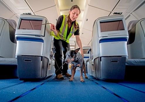 flughafen frankfurt hunde gegen bettwanzen reisetipps. Black Bedroom Furniture Sets. Home Design Ideas
