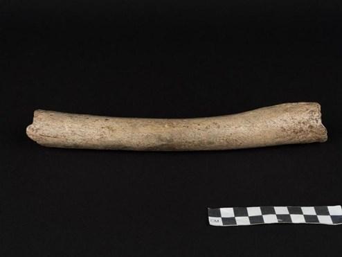 Urmenschen bandelten mit Neandertalern an