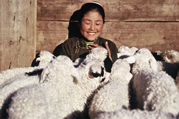 http://images.derstandard.at/t/M625/movies/2003/6386/161128103017568_14_die-geschichte-vom-weinenden-kamel_aufm03.jpg