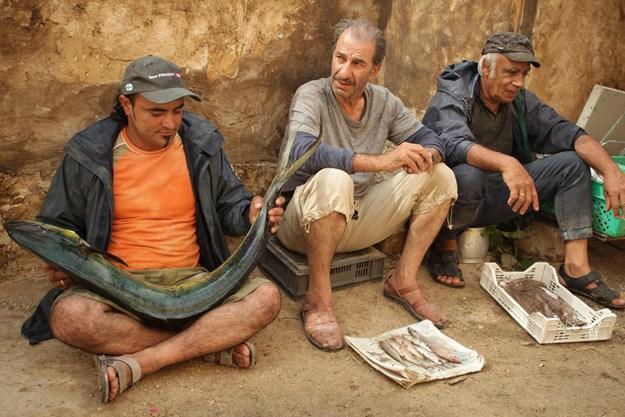 http://images.derstandard.at/t/M625/movies/2011/12814/160223120048567_30_das-schwein-von-gaza_aufm3.jpg