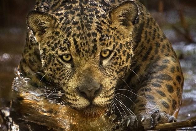 http://images.derstandard.at/t/M625/movies/2013/19413/160626210056842_14_amazonia-abenteuer-im-regenwald_aufm02.jpg