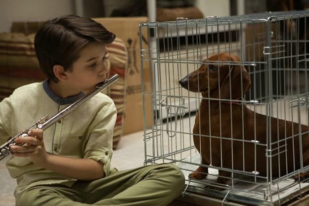 http://images.derstandard.at/t/M625/movies/2016/23616/160727223056566_8_wiener-dog_aufm04.jpg