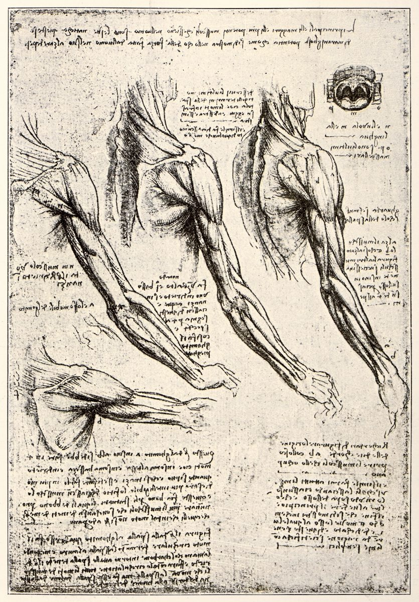 Fantastisch Grundlegende Menschliche Anatomie Und Physiologie ...