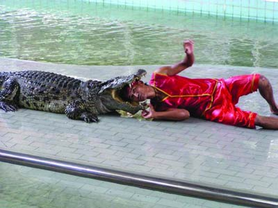 Krokodil Groß Zähne Schwarz Caiman Wunderschön Neu Gt Serie Sport Unisex Uhr Hohe Belastbarkeit Armbanduhren