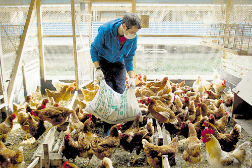 Bescheiden Altes Bild Hühner Hahn Im Bilderrahmen Bauernbild Signiert Bauer