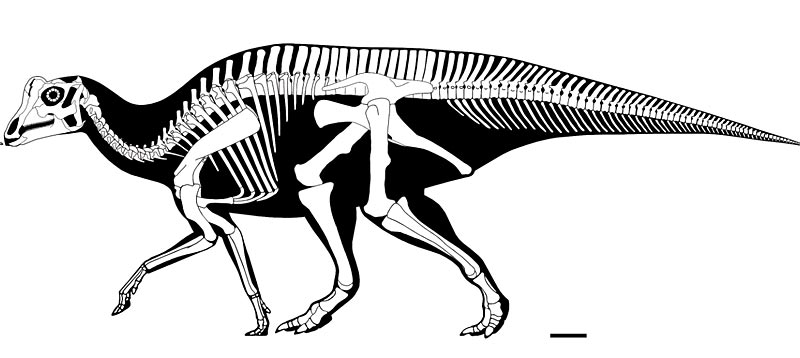 Dino Jungle Potsdam