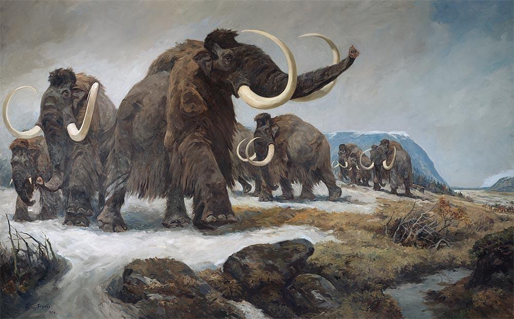 Wettlauf um erstes geklontes Mammut - Natur - derStandard.at › Wissenschaft