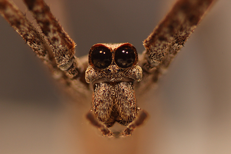 Arachnid Web Design