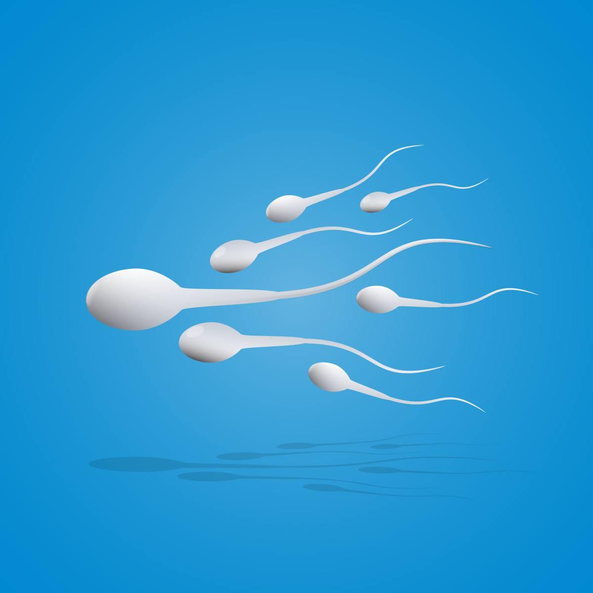 spermien gelb