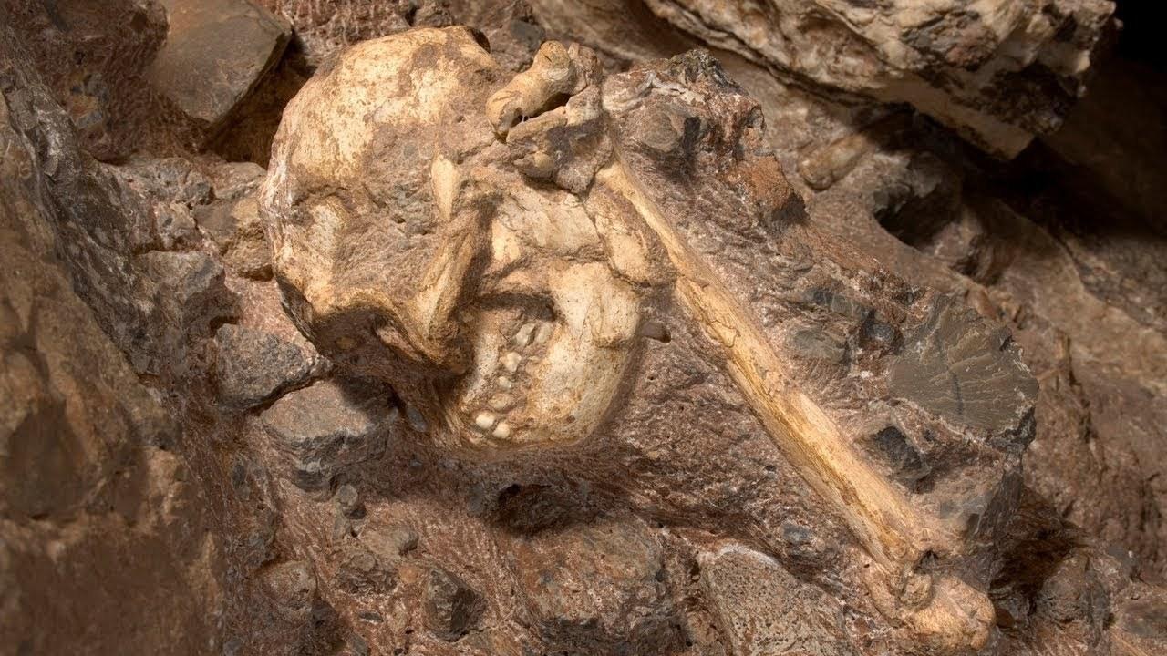 Nahezu kompletter Australopithecus präsentiert