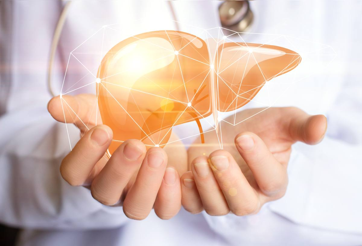 Transplantation: Leber ohne Körper am Leben erhalten