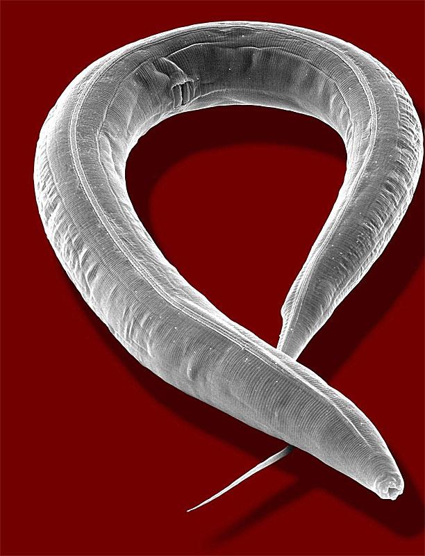 Forscher dressieren einen im Computer zum Leben erweckten Wurm