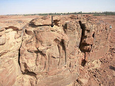 Lebensgroße Dromedar-Reliefs in der Wüste entdeckt
