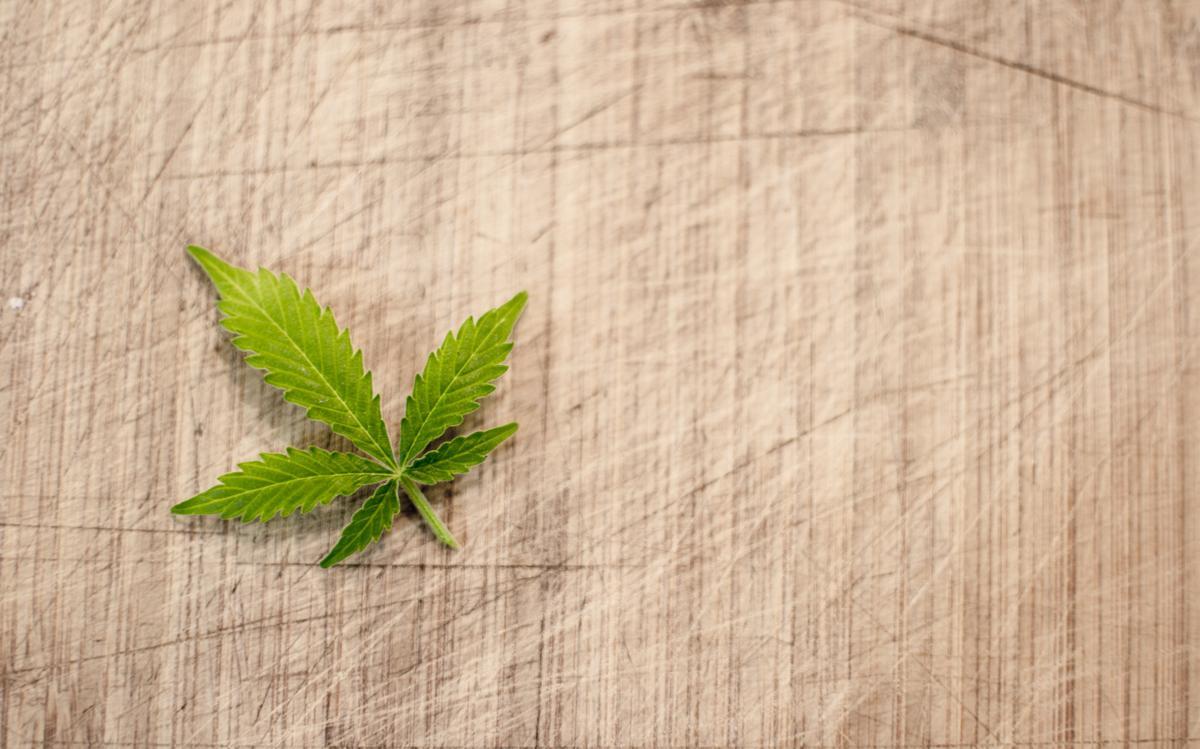 Cannabis ist die Arzneipflanze des Jahres