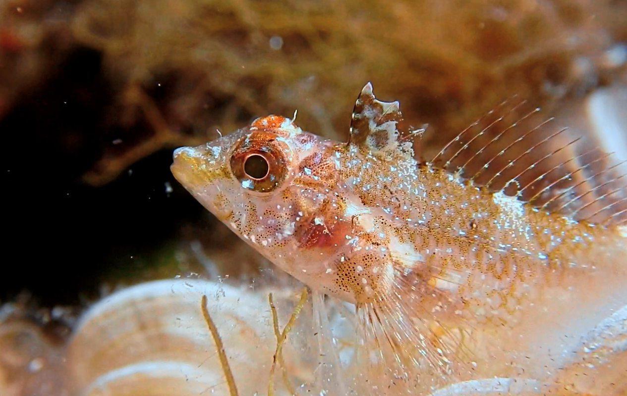 Lichtortung: Ein Fisch, der Augenblitze in den dunklen Ozean schickt