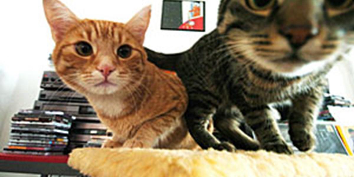 Hoffnung Für Hund Und Katze Wirtschaftsrecht Derstandardat