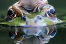 foto: klopeiner see/zupanc