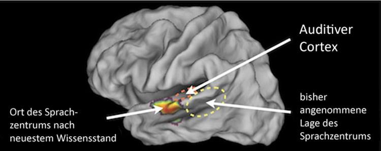 Gehirn Sprachzentrum