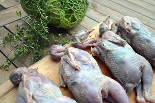 Würzen mit Vögeln - Gruß aus der Küche - derStandard.at › Lifestyle