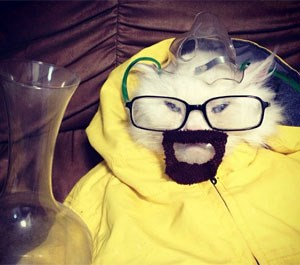 George the Kat, als Breaking-Bad-Meth-Koch Walter White.