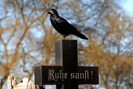 foto: friedhöfe wien gmbh/wolfgang fendt