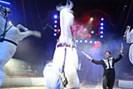 foto: circus louis knie