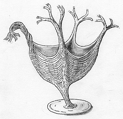 Der vielleicht älteste Muskel der Welt - Natur - derStandard.at ...