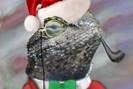 foto: lizard squad/twitter