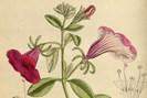 lith.: wikimedia/m.s. del., j.n.fitch