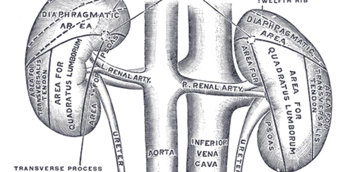 Hypertonie, Diabetes und Adipositas sind \