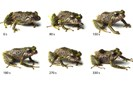 foto: zoological journal of the linnean society