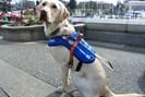 foto: b.c. and alberta guide dogs