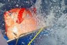 foto: noaa fisheries