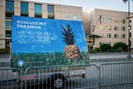 foto: peng collective