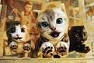 foto: cat simulator