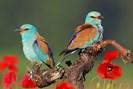 foto: birdlife/michael tiefenbach