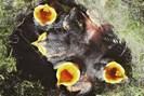 foto: camilla hinde