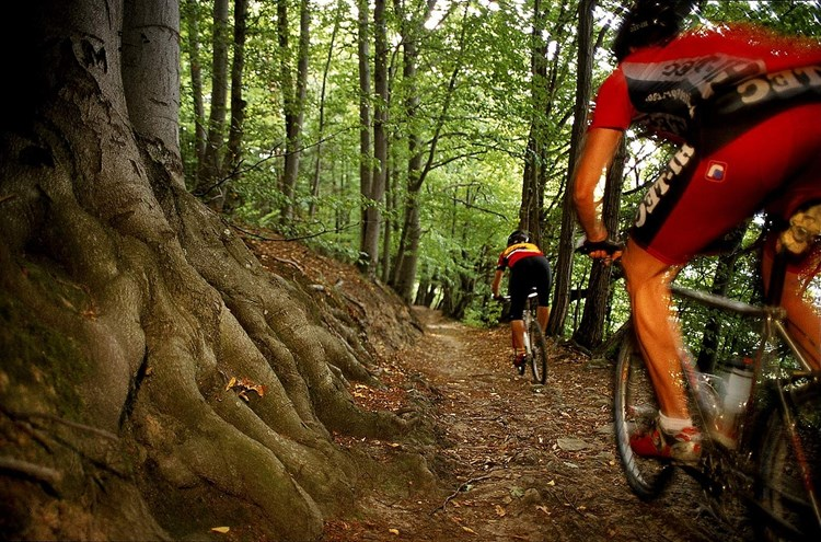 Wienerwald: Acht neue Single-Trails fr Mountainbiker