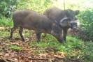 foto: bawean endemics conservation initiative, beki