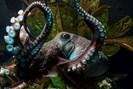 foto: national aquarium of new zealand