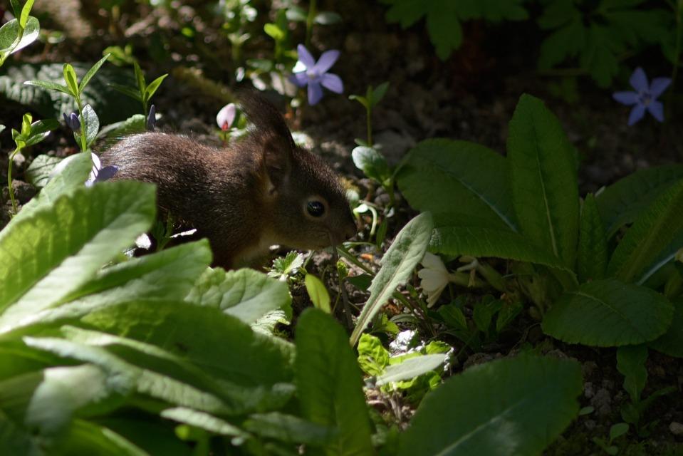 Eichhörnchen Im Garten : eichh rnchen im garten cremers photoblog derstandard ~ Watch28wear.com Haus und Dekorationen