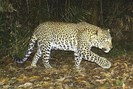 foto: conservation international indonesia