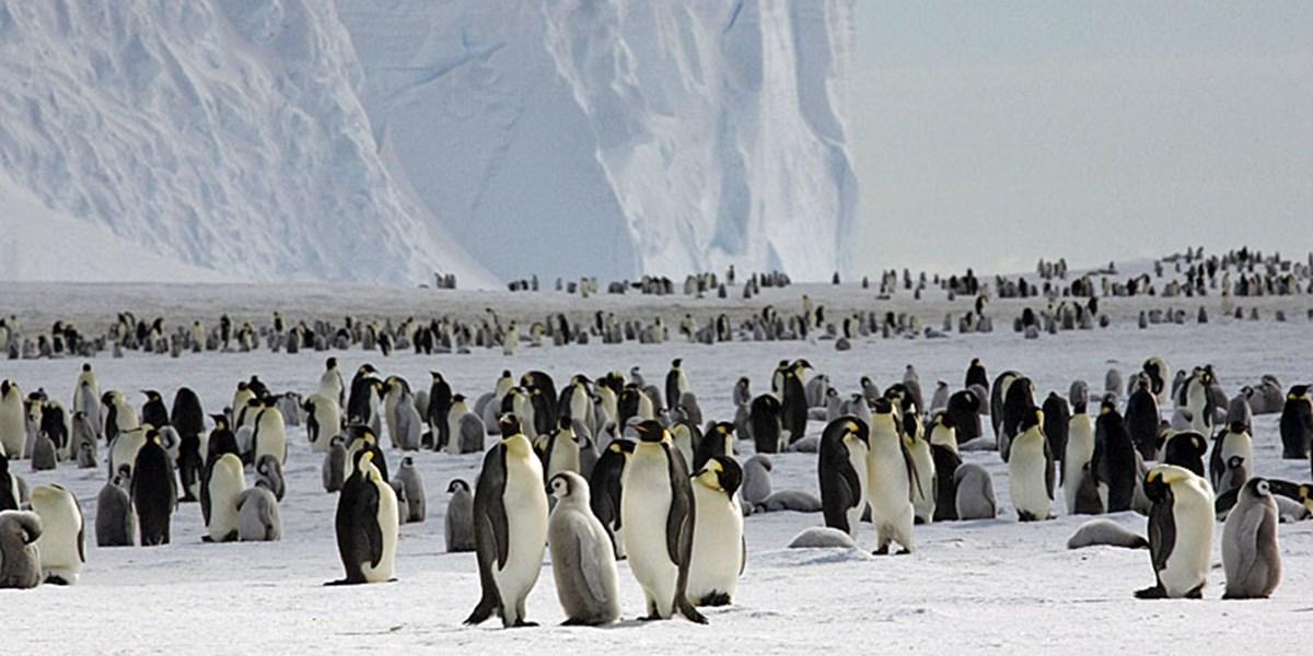 Pinguin-Dating-Methode