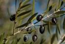 foto: apa/afp/jorge guerrero