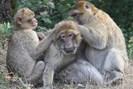 foto: julia fischer/german primate center